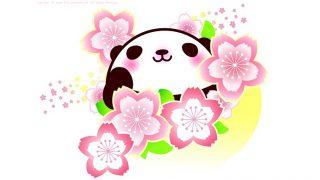panda 042